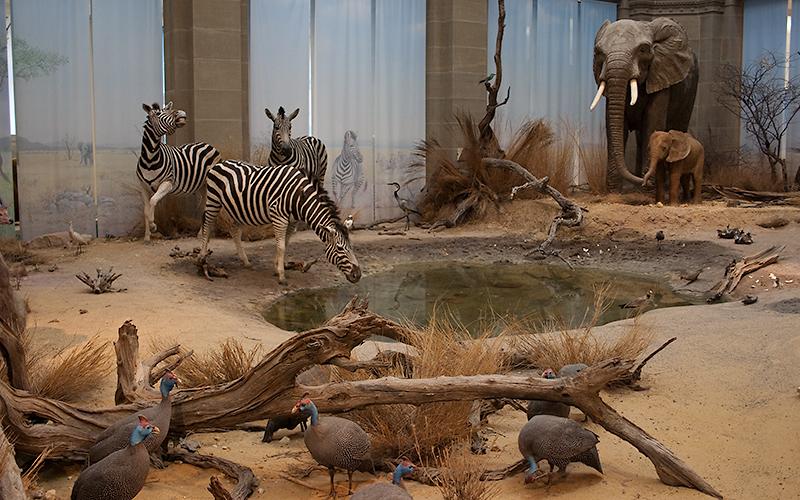 Savanne im Lichthof des Museum König