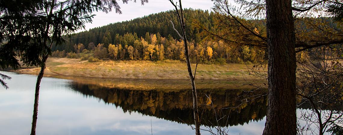 Vorschaubild Harz