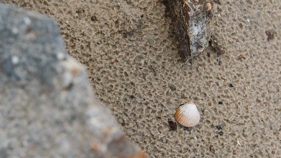 Muschel im verregneten Sand