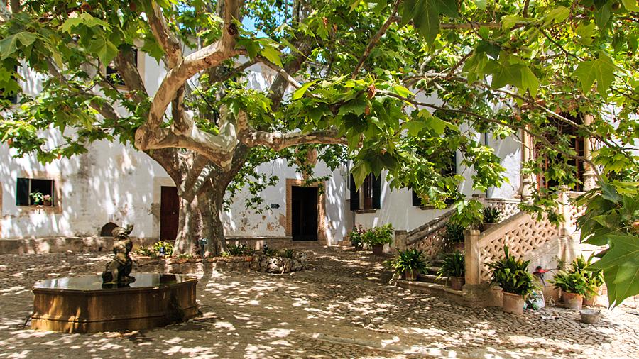 Herrlich gewachsener Baum am Herrenhaus