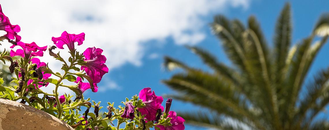 Vorschaubild Arabische Gärten