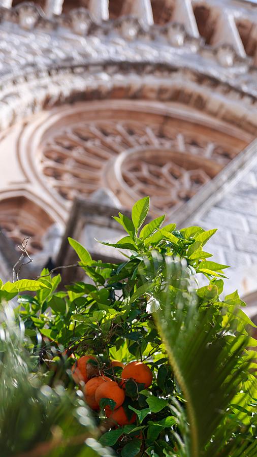 Orangenbaum vor der Pfarrkirche San Bartolomé