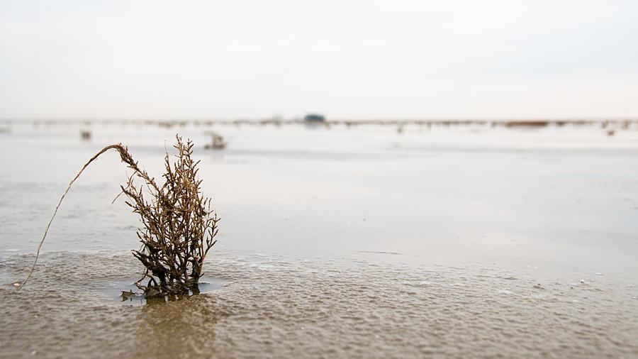 Leben im Wattenmeer